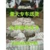 广西养兔场-最大柳州规模化獭兔种兔养殖场