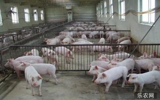 维生素C在治疗猪病中的妙用