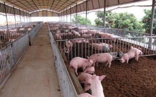 猪场的规模化管理要素