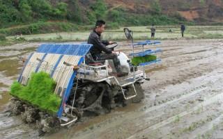 早稻机插秧技术