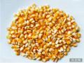 饲料中的小麦与玉米营养价值比较
