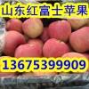 纸袋红富士苹果价格2017