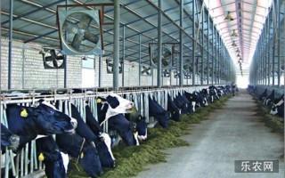 怎样给奶牛去角?给奶牛去角的方法