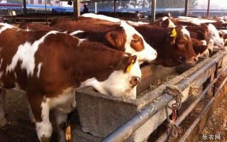 一个人可以养多少牛?怎样养牛才能赚钱?