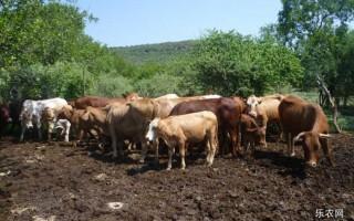 养牛场牛粪如何处理?