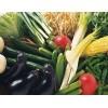 重庆蔬菜批发价格 重庆周边蔬菜采摘价格 奉节县耕植农业发展有