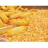 纵翔.饲料厂大量收购玉米、碎米大米