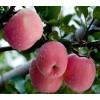 白水苹果批发哪家好-正宗核桃哪家好-渭南天顺农产品商贸有限公