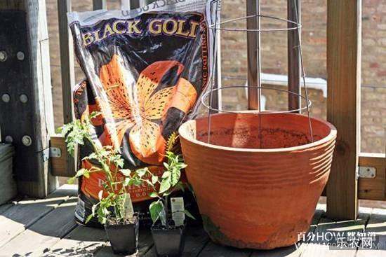 花盆种植西红柿所需的材料和工具: