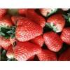 现摘草莓批发多少钱一斤-资中草莓批发电话-资中县大千种植农民