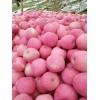 渭南苹果秋池王从哪里买_哪里产的玉米最好_渭南天顺农产品商贸