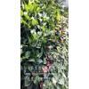 仿真植物墙图片_客厅垂直绿化植物_洛阳柏霖生态农业有限公司