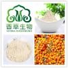 沙棘蛋**  沙棘籽粕提取物 蛋白质20% 香草生物