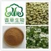 波尔多叶提取物 波尔多叶粉 80目 香草生物 波尔多叶速溶粉