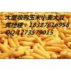 常年大量收购玉米大豆青饼高粱小麦大米等饲料原料