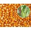 常年采购玉米大豆