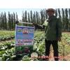 2018年坝上蔬菜种植基地大量供应黄心娃娃菜