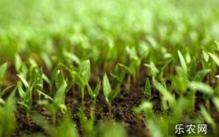 张洪楼创建中国有机农业网,打造互联网+有机农业专业平台