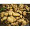 土豆冀张薯十二(226)、荷兰十五、大西洋、夏坡蒂、V系列