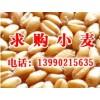 饲料厂常年求购玉米、小麦、大米、糯米、黄米、高粱等原料