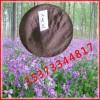 河北沧州景和兴丰农场低价出售'二月兰'种子
