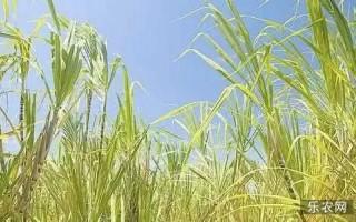 【观点】农业的发展方向到底在哪里?原来的理解有些错
