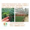 河南番茄苗货比三家,还是选安信种苗