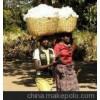 采棉机棉花采摘机大型棉花采摘机价格大型棉花采摘机多少钱