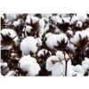 倍力待采棉机倍力特小型棉花采摘机大型棉花采摘机多少钱