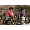 采棉机7660大概多少钱采棉机清洗液采棉机配件采棉机商业险
