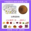 宁陕国圣白果提取物 优质原料 厂家现货