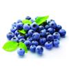 蓝莓果苗批发种植技术基地