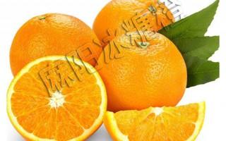 做冰糖橙代理,你真的知道哪个品种最好吗?