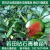 泰国红宝石柚的时代来临了