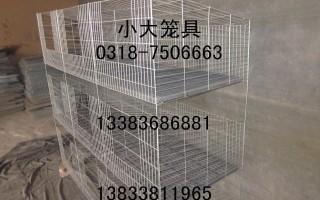 鸡笼鸽子笼兔子笼宠物笼养殖笼竹鼠笼鹧鸪笼狐狸笼鹌鹑笼兔笼鸽笼
