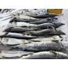 冷冻鲟鳇鱼批发价格,冷冻鲟鳇鱼哪里批发