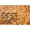 酒厂现款求购玉米粒300吨