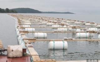 中国上市公司在俄滨海县进行海参养殖