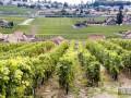 果园土壤层酸化该怎么办?果园土壤层酸化的伤害及防范措施