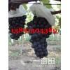 陕西夏黑葡萄基地,户太葡萄葡萄产地上市价格