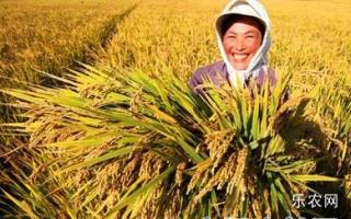 确保國家粮食安全为长久主题