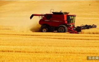我国夏季粮食增产 但种植面积却是降低