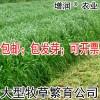 黑麦草种子包邮 特高冬牧70养殖多年生一年生黑麦草牧