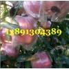 陕西高原万亩红富士苹果产地批发大量上市