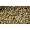 为什么选择特种养殖禾牧黑斑蛙?