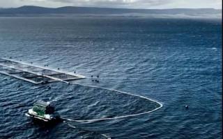 12月1日起,智利三文鱼生产商Australis离去新海线