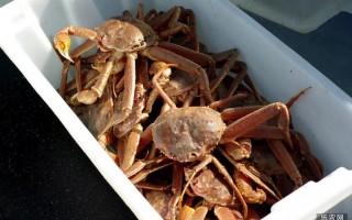 阿拉斯加捕捞渔业雪蟹配额提升23%,红眼雪蟹打捞季停业