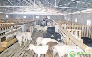 十月加强畜禽饲养管理要点及注意事项