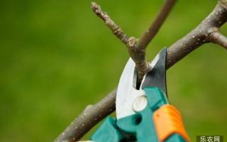 果树修剪锯口发生腐烂、淌黑水现象的原因详解