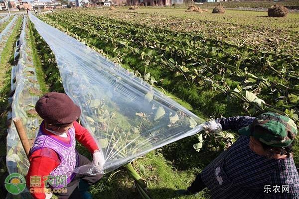 霜降前后的气候特征及农事活动
